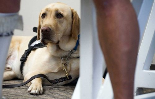 Southwest joins other airlines in banning emotional support animals