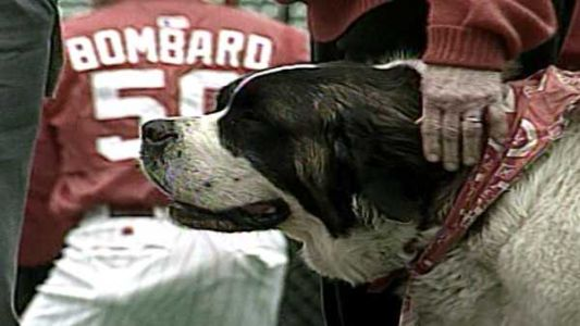 Archives: Schottzie the Saint Bernard, Cincinnati's furry baseball royalty