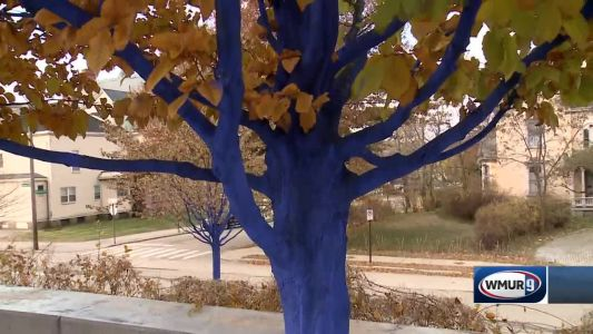 Grow it Green: Blue trees in Manchester part 1