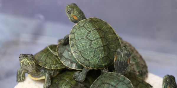 More than 5,000 turtles were found smuggled in luggage at an airport in Malaysia