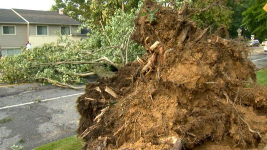 West Towson residents clean up storm damage