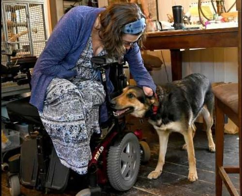 Rat attacks service dog in Natick: Call for town to solve rat problem