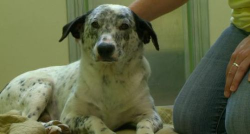 Pet organization discovers abandoned dogs in Iowa forest