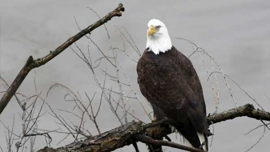 Bald eagle shows air superiority, sends $950 government drone into lake