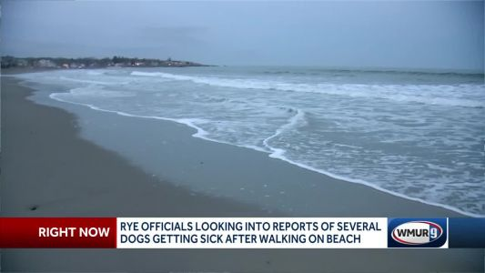 Rye officials investigating reports of dogs getting sick at a popular beach