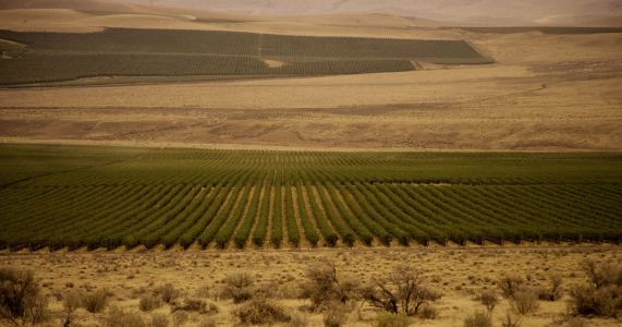 These days, more cabernet than water flows at Cold Creek Vineyard