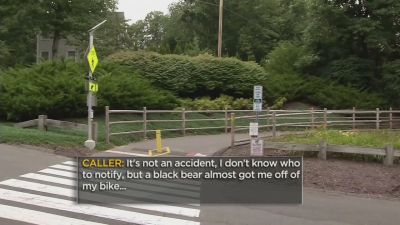 Man describes moment black bear 'charged' him while biking