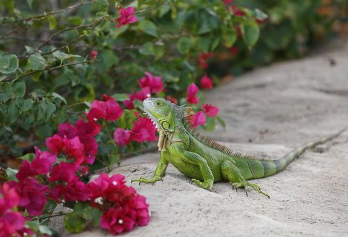 It's so cold in Florida, iguanas might fall from trees