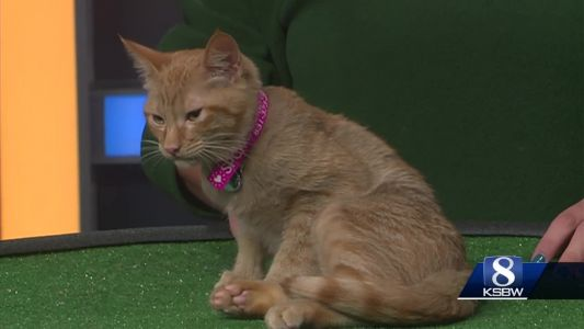 Pet of the Weekend: Freckles the Cat