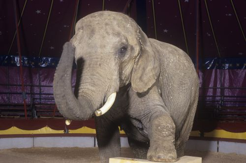 Cuomo signs bill outlawing use of elephants for entertainment
