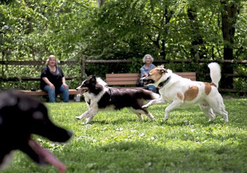 Pet Tales: Pets outnumber children in U.S. households - and we're spoiling them