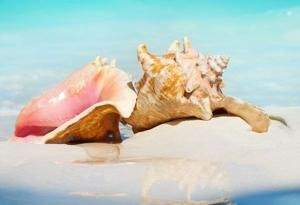 40 seashells equals 15 days in jail for tourist in Florida
