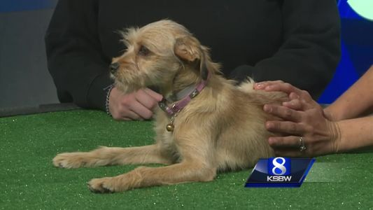 Pet of the Week: Charlie the Dog