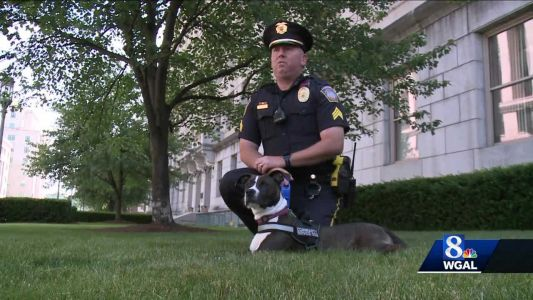 Meet Cappy, a stray turned into a policeman's best friend and a part of the Pennsylvania State Capitol Police Force
