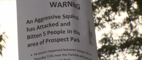 Parkgoers warned about possibly rabid squirrel after 5 people attacked
