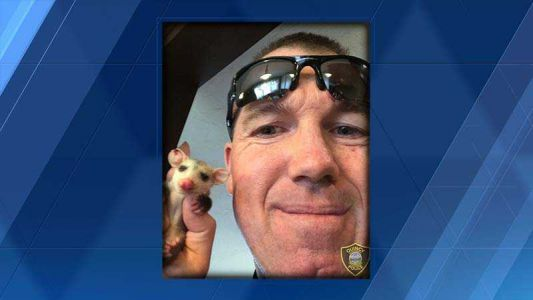 Quincy police officer rescues baby opossum, takes it home for night