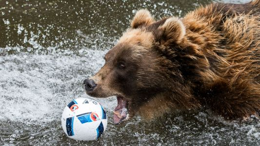 VIDEO: Russian team enlists bear to kick off league match!