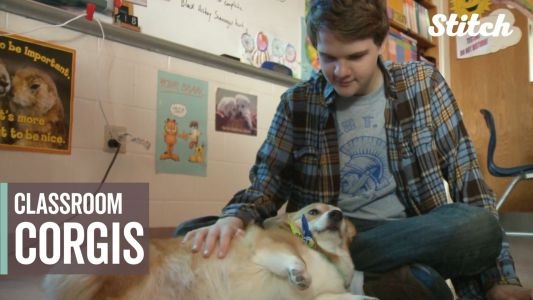 Teacher's therapy corgis make a 'paw-sitive' difference in special education classroom