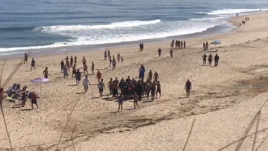 Cape Cod shark attacks show need for better cell service