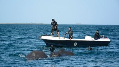 Wild video: Sri Lanka navy rescues elephants washed out to sea