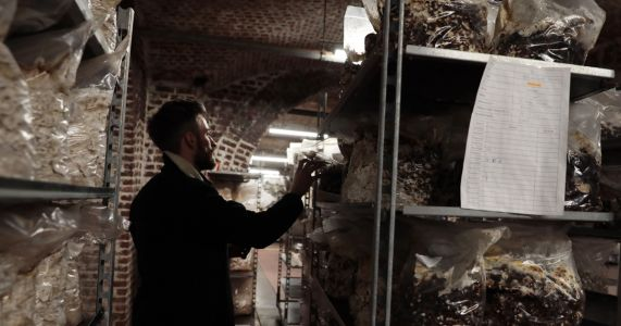 Mushrooms grow from beer waste in the cellars of Brussels