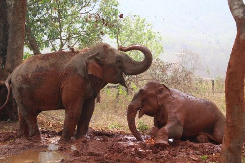 I visited a nursing home for retired lumberjack elephants in Myanmar - here's what it's like to care for aging elephants every day