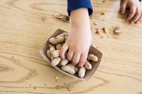 Peanut allergy drug could become available by next year