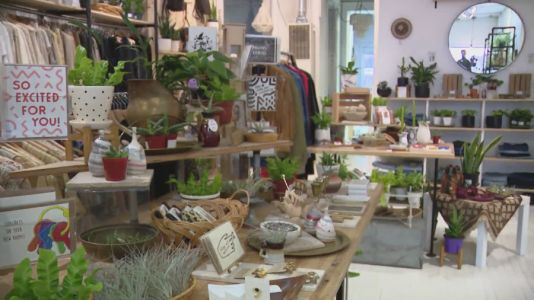Pilsen store offers wide variety of plants for indoor planting