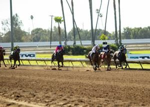 Los Alamitos track on 10-day probation after horse deaths