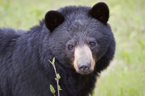Bear euthanized after breaking into house for loaf of bread