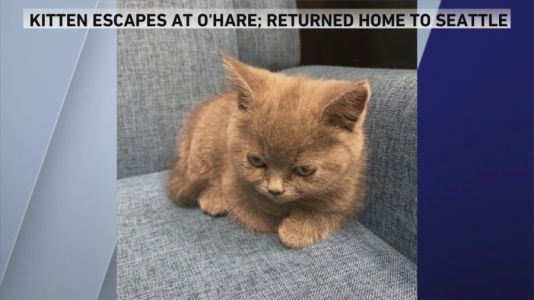 Kitten who escaped at O'Hare returned to owners in Seattle
