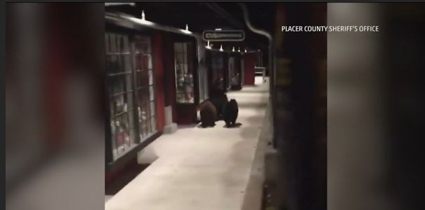 Are these bears trying to get an early jump on Black Friday?