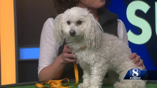 Pet of the Week: Belle