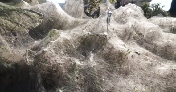 Walk into my parlor: Greek spiders spin giant web over shore