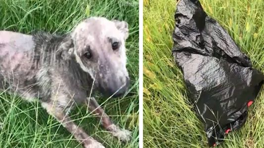 Small dog found stuffed in garbage bag, abandoned