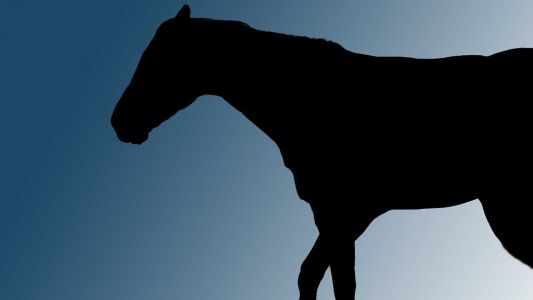 New California law aimed at reducing horse racing deaths