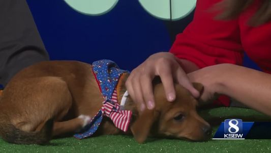 Pet of the Week: Shorty