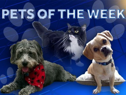IMAGES: Kentucky Humane Society Pets of the Week