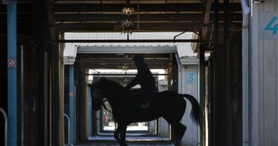 Even horses get the blues at Emerald Downs