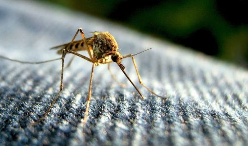 New cases of West Nile virus in birds found in Anderson County