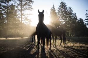 A horse was neglected by its owner. Now the horse is suing