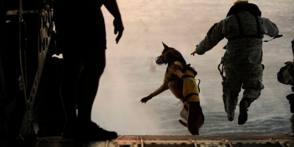 The soldier's best friend: 9 ways that militaries use dogs for missions