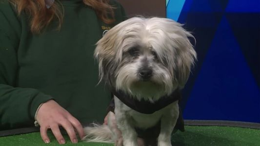 Pet Of The Weekend: Maxwell