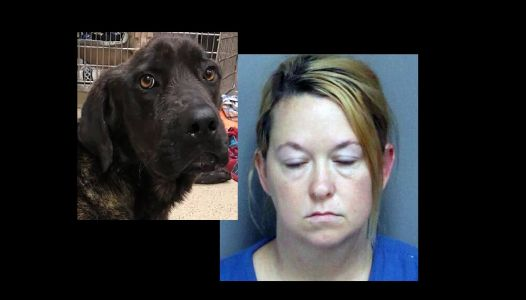 Woman accused of letting ex-boyfriend's dog starve is charged; rescue group commits to saving Champ