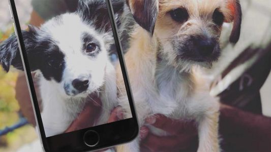 KC Pet Project using free facial recognition software to help reunite lost pets