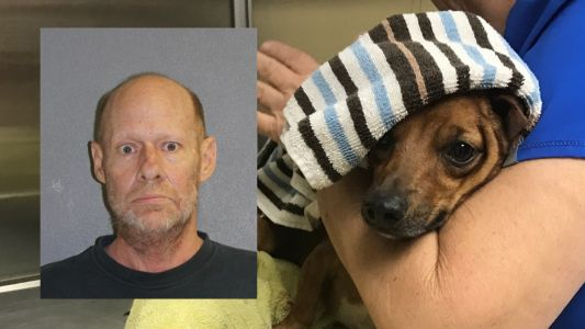 Dog's leg to be amputated after South Daytona man throws M80 firecracker at it, police say