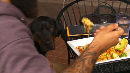 What Are The Rules For Dogs Eating And Drinking Out?