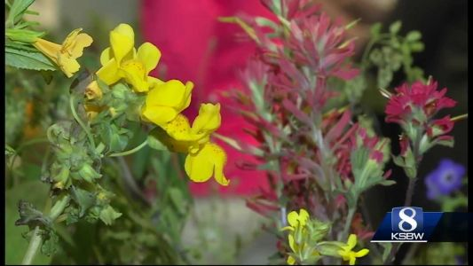Attendees can see over 600 species of wildflowers on display. The show runs through Sunday