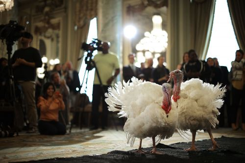 A day in the life of a presidentially pardoned turkey
