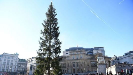 'Britain's Most Famous Christmas Tree' Criticized For Looking Sparse, Droopy And Sad